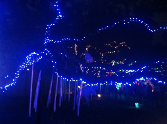 Some of the lights. They created a path and had Christmas music. The animals were mostly asleep, but the Lion did come out :)