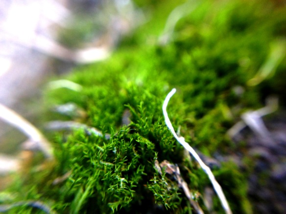 A little rock moss for you. up close and personal thanks to more macro lense experiments.